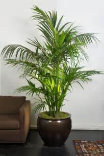 House Plant Pots 25 Best Ideas About Large Indoor Plants On