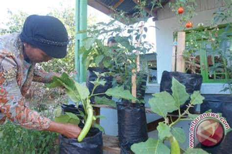 hijau bumiku damai hidupku mengubah pekarangan rumah