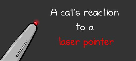dogs and laser pointers a cat s reaction to a laser pointer the oatmeal