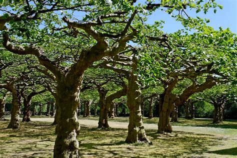 am botanischen garten panoramio photo of krefeld am botanischen garten