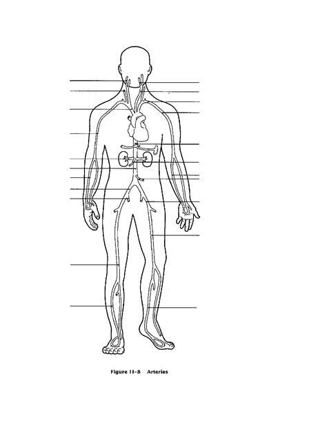 coloring pages blood worksheet 9 best images of blood vessels worksheet blood pressure