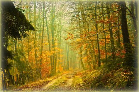 imagenes verdes naturales unique wallpaper 24 fotograf 237 as de paisajes naturales del