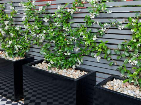 plantas para patio plantas para un patio peque 241 o