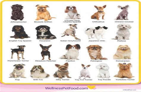 list of all breeds list of all of breeds dogs breed sierramichelsslettvet