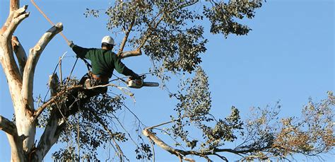 tree trimming tree removal gerald s tree service