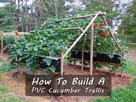 how to build a trellis how to build a pvc cucumber trellis shtf prepping