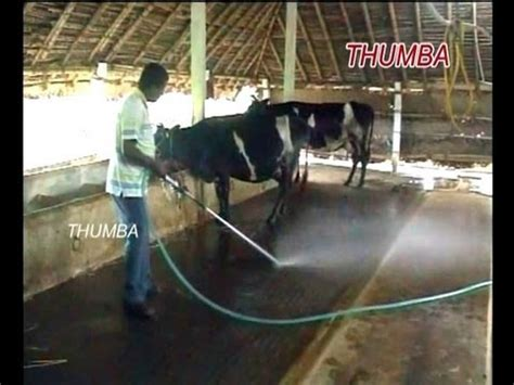 Animal Farm Keeps Desktop Clean by Dairy Dung Cleaning Thumba Agrotech Palani Tamil
