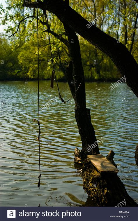 water rope swing rope swing on tree with water in the background stock