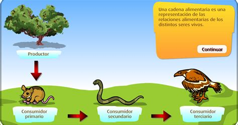que son las cadenas y redes alimentarias wikipedia cadena alimentaria para ni 241 os imagui