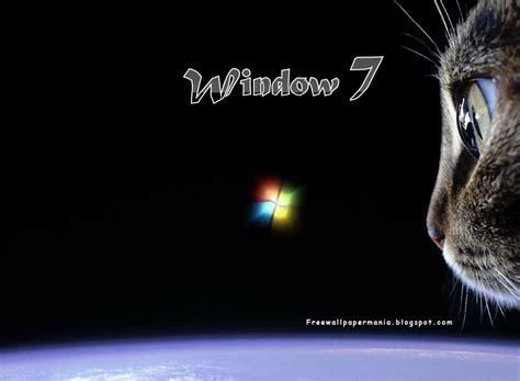 cat wallpaper for windows 7 windows 7 wallpaper cats wallpapersafari