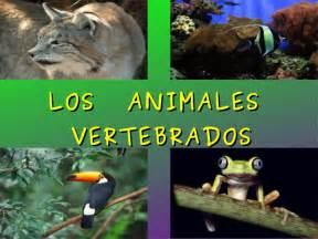 los animales vertebrados power point vertebrados 1