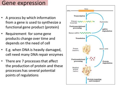 genetics of hair color gene expression download the roman question and the powers 1848 1865