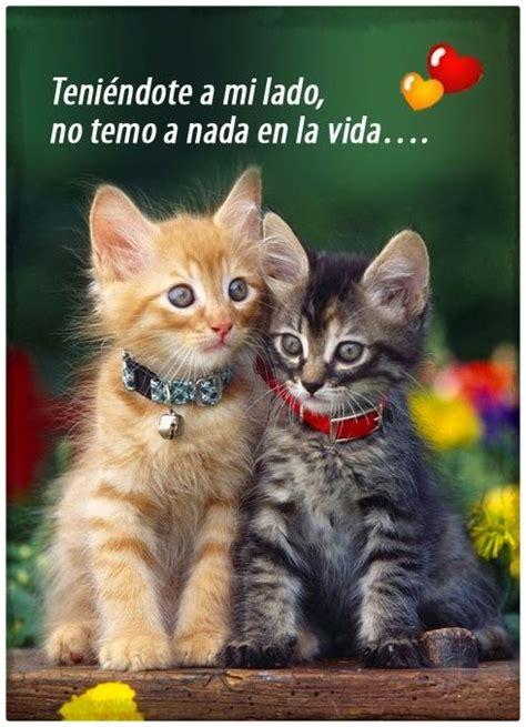imagenes romanticas de gatos imagenes de gatos con frases de amor archivos gatitos