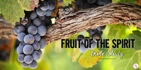 fruit in the bible homeschoolin quot a child in the way he should