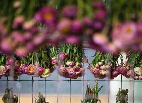 flower design melbourne rebecca louise law suspends floral canopy in melbourne