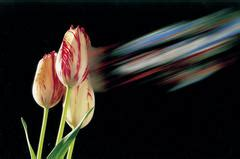 ufficio olandese dei fiori ufficio olandese dei fiori un punto di riferimento per la