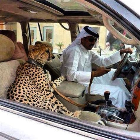 exotic cats supercars  craziest car trend carwow