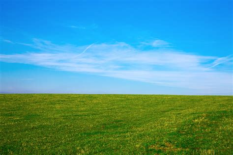 The Field green field and blue sky free stock photo domain