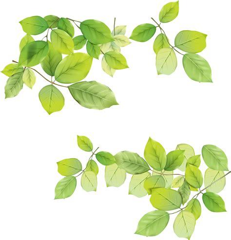 green leaves png image veerendra vijaya pinterest leaves png pesquisa google 1 pinterest leaves and