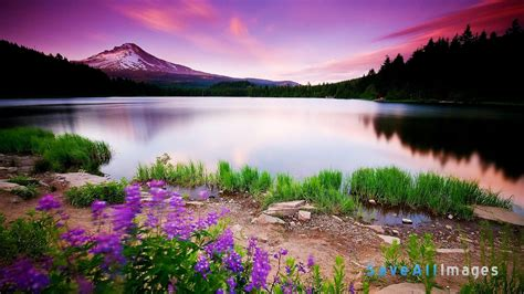 hd themes beautiful 45 hd beautiful wallpapers backgrounds for free download