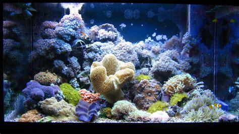 Heater Aquarium Atman 100 Watt my nano reef aquarium 25 gallon on vimeo