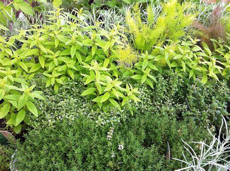 Garden Of Herbals Herbs Around The Home Part 2 Gluten Free Scd And Veggie