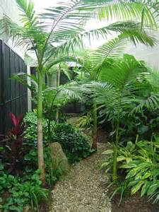 Small Tropical Garden Ideas 25 Best Ideas About Small Tropical Gardens On Small Balcony Garden Decorative