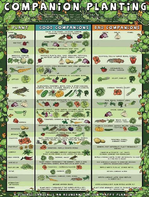 garden chart gardening companion planting chart c4 ca creative alchemy