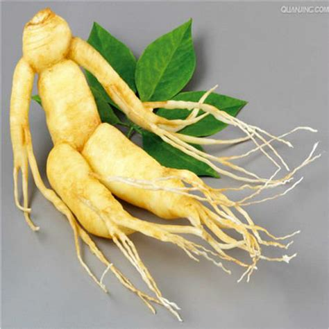 Ginseng China original pack 10pcs hardy panax ginseng korea