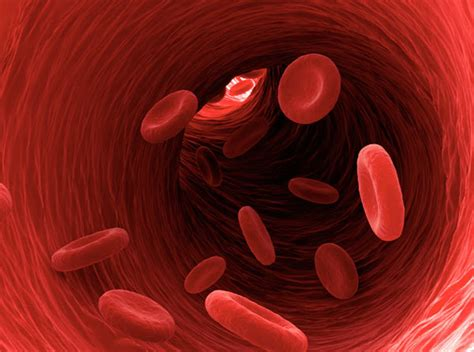 what color is blood in the human blood circulation in human what is the function of
