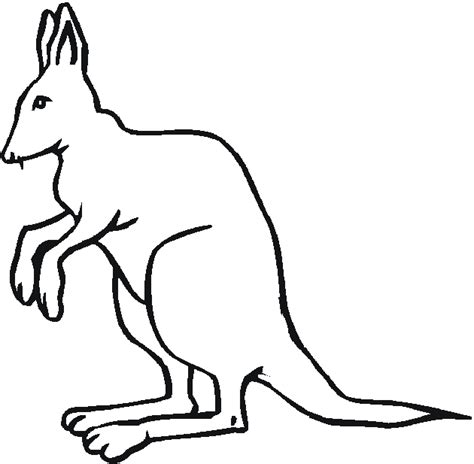 animal coloring pages kangaroo free australian animals coloring pages