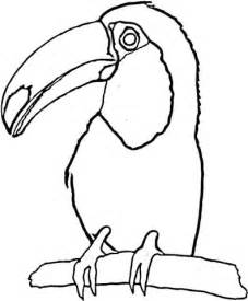 toucan coloring page toucan on the tree coloring page supercoloring