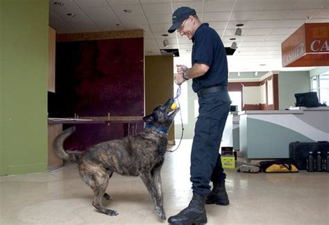 hurley emergency room hurley center in flint considers adding dogs to security canines and handlers