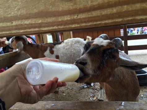feeding animals  white post farms  melville long island