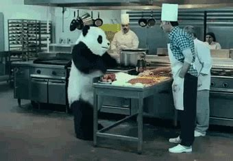 cooking gif panda cooking gif find share on giphy