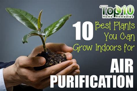 10 best plants you can grow indoors for air purification 10 best plants you can grow indoors for air purification