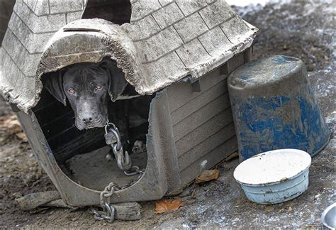 dog house adelaide animal cruelty officers confront neglect myth toledo blade