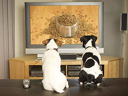 puppy tv t v wagging world