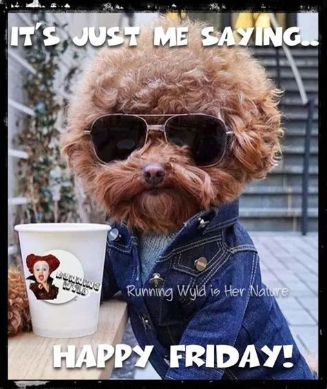 Happy Friday Meme Funny - its just me saying happy friday pictures photos and