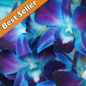 blue orchids for sale dendrobium galaxy blue orchids