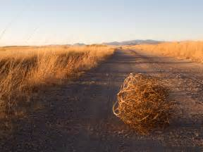 Tumbleweed Lesson 184 Tumbleweeds Are Cooler Than Your Boyfriend