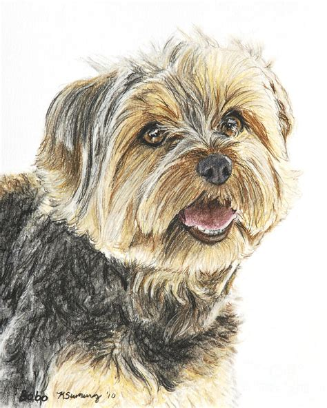 yorkie color yorkie in color pastel by kate sumners