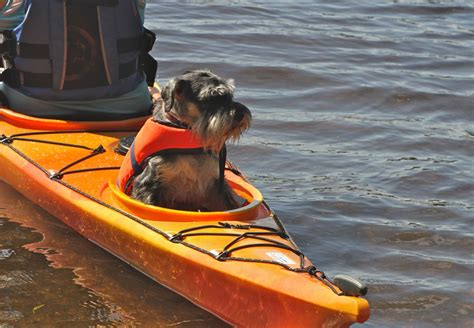 kayak for dogs kayaking with a outdoorsfinland