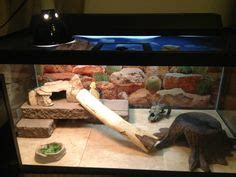 Bearded Tank Decor by Bearded Enclosure On