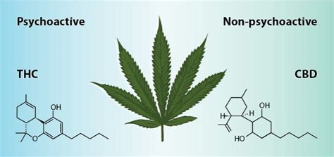 thc  cbd whats  difference leaf science