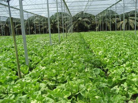 pembahasan prinsip prinsip pertanian organik urbanina