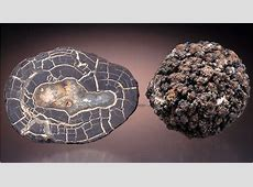 Rare-Earth Minerals Hold Promise for Seabed Mining ... Manganese Nodules Ocean Floor