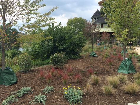 dominion power capital one volunteers complete cherry tree walk plantings lewis ginter