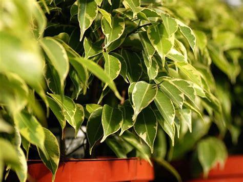 schlafzimmer pflanzen 17 luftreinigende pflanzen schlafzimmer bilder die besten