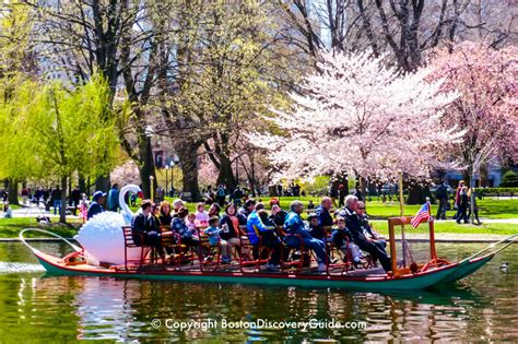 swan boats boston public garden boston swan boats top attraction boston discovery guide